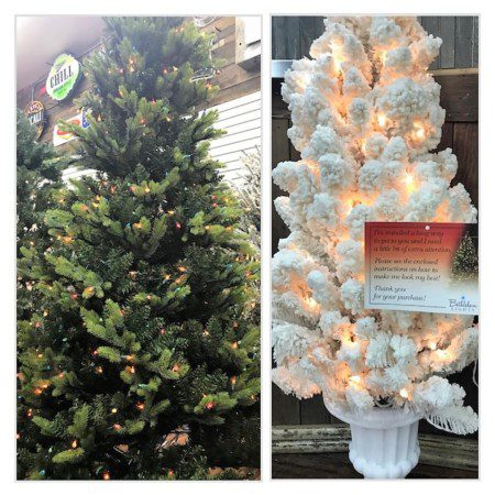 Santa's Best and Bethlehem Lights Christmas trees